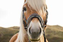 Paarden Fotoshoot Duinen / www.merelbakkerfotografie.nl Fotografie Alkmaar. Portretfotografie - Loveshoots - Vriendinnen shoots - Familieshoots - Paardenfotografie - Bloesemshoots - Herfstshoots