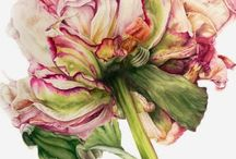 цветы ботаническая живопись