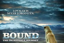 BOUND - a journey / Ladies and gentlemen, this is a short collection of some of the MEMES I found recently after the original picture of my dog went viral in the internet.   Well, I guess there is nothing else left then to enjoy the creative work and effort some people put into making this dog famous ;)