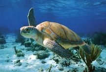 Our Magnificent Oceans / Wonders from the world's oceans to inspire and amaze.