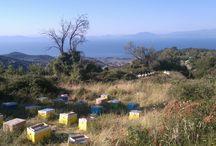 Bee life / φωτογραφίες από την μελισσοκόμια https://www.instagram.com/p/BX-Oe7hB_ug/