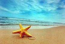Sea & sun & summer