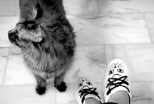 Walking in my shoes / Scarpe in tela dipinte a mano.