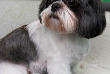 I Love My Shih Tzu