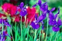 Min hage / Blomster jeg finner i min hage