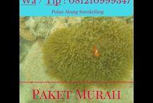 Pulau Abang Batam Kepri, Call : 081210999347