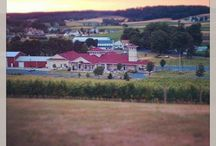 Our Vineyards & Winery