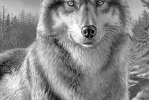 Quit Wolf