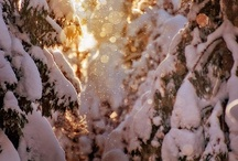 Let It Snow ☆☆☆☆☆♡☆☆☆☆☆ / I Love to see snow. It is never the same twice