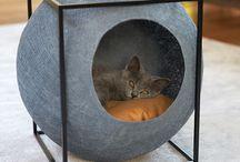 Cats in da house