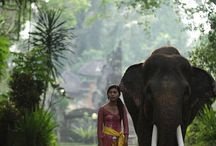 Bali Elephants / Bali Elephant Preserve
