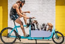 Cargo  Cycling for Dogs / Taking Willowbee in the Cart of my bicycle!  English Bulldog LOVE!