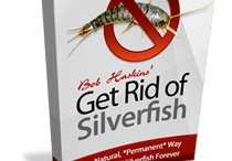 Silverfish infestation / How to get rid of silverfish infestation?