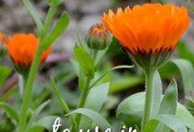 Herbs / Bylinky