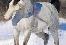 mooie pony's