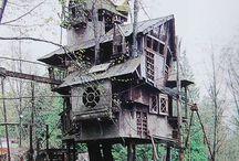 curious houses
