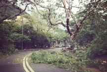 Hong Kong: Typhoon / by Localiiz Hong Kong