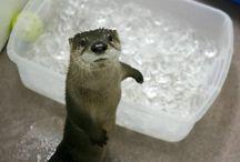why i otter! / by Liz Becker