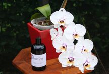 Orchid Love & Care