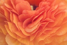 Outrageous Orange / by The Blossom Shop