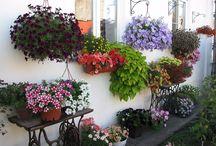 kwiaty taras