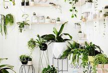 roślinny design
