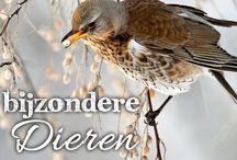 Bijzondere dieren / Wie heeft nog niet gehoord van de nieuwe wildernis, de film ver de Oostvaarder plassen? Zo mooi en ongerept kan Nederland zijn. Je hoeft natuurlijk niet alleen maar naar de Oostvaarderplassen af te reizen om te genieten van het brede scala aan wild dat zich in de Nederlandse landschappen verborgen houdt. Stap op je fiets en laat je verrassen door een wellicht mooie ontmoeting met een van de vele dierensoorten die je tegen kunt komen!