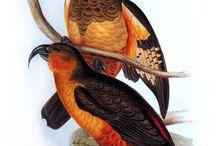 BIRDS / by Vint Brun Hannay