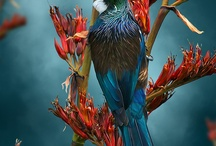 A R T / Series of digital bird paintings by Julian Hindson, see the portfolio at www.hindson.co.nz