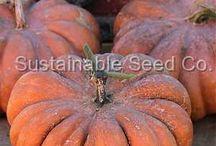Pumpkins / Heirloom Pumpkins