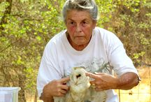 Owl Talk at KOP / Burleigh Lockwood of the Fresno Chaffee Zoo came to Kaweah Oaks Preserve to talk about owls and other raptors - how to identify them and how their bodies help them fly and hunt.
