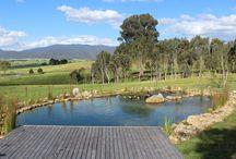 organic pool