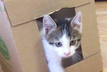 Наш  котик Кошик