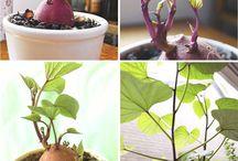 ZAHRADA ovocie a zelenina