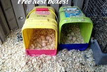 Ideas for my Chooks