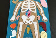 Testünk