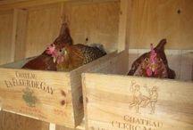 Chicken and ducks