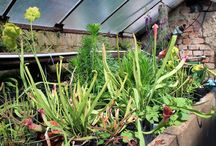 Tajemná zahrada v pěstebním skleníku