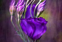 Purple stuff / by Mary O'Brien Prescott