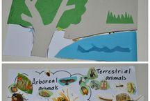 Kultura montessori rozwiniecia
