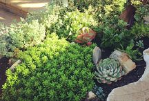 LANSCAPE PLANTS / COLLECTIONS FROM LANDSCAPE