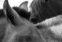 09 | Horses