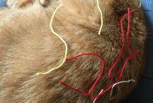 Haken: Haken met Katten