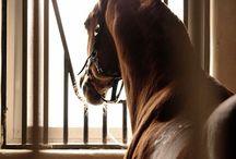 конное