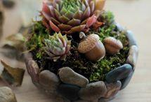 plantas y masetas