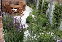 Project Bowden House / www.aralia.org.uk Contemporary Courtyard garden in Cheshire. Includes natural stone paving, contemporary planters and hardwood decking.