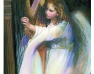 Harp / Harp / by Amy Steinhart