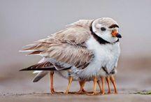 Oiseaux / Source d'inspiration