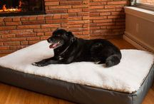 Orthopedic Products / Now that your dog or pet is getting older, it's time he enjoyed products designed to provide the comfort and support they need. Orthopedic dog beds are the perfect place for our four-legged friends to relax and rejuvenate. Pet stairs are available in three sizes to help pets of any size get wherever they want to go. Sure your dog may be getting older, but you can help make his life even better.
