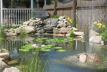 Water in your landscape / Using water features in your landscape can be as easy as a self contained fountain and as elaborate as a pond and waterfall. Here is some ideas of using water to add another element to your landscape. / by Viola Nursery and Greenhouse